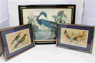 Audubon Print Collection