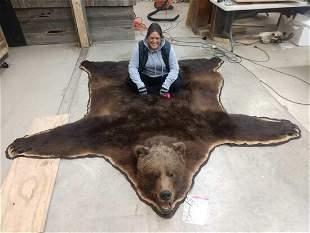 Beautiful Russian Brown Bear Rug