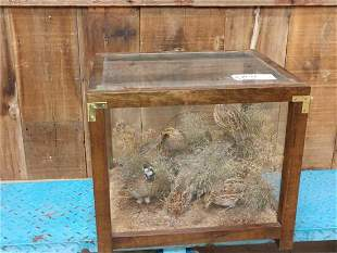 Group Of 4 Quail In Glass Case Taxidermy Mount