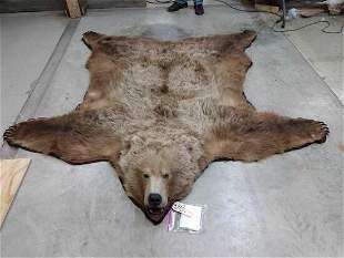 Nice Grizzly Bear Rug Taxidermy
