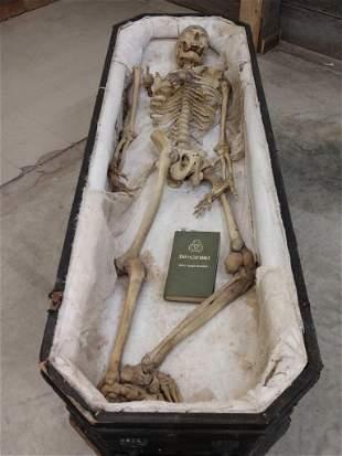 Vintage Articulated Real  Human Skeleton & Casket