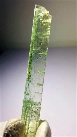 31.6 Gram Terminated Undamage Green Kunzite
