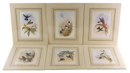 Six matted reproduction prints of hummingbirds, six