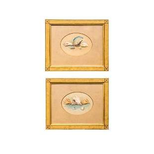 Pair of Watercolor Paintings of Shells