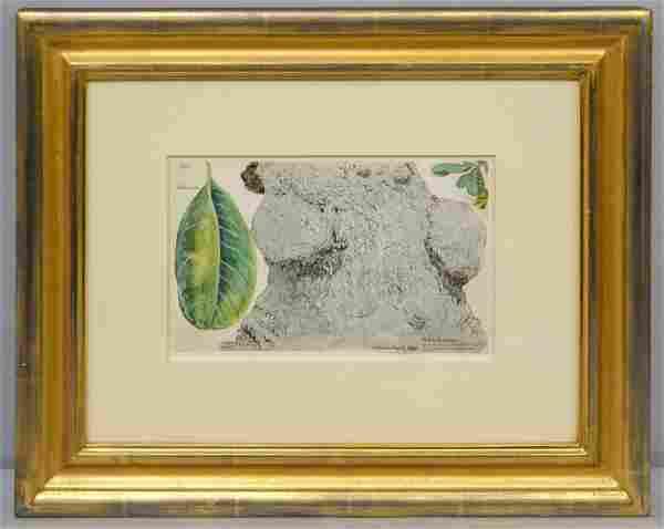 Charles De Wolf Brownell, Chicharron Watercolor