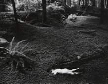 WYNN BULLOCK - Child in Forest, 1951,