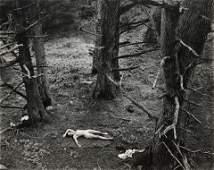 WYNN BULLOCK - Woman and Dog in Forest, 1953