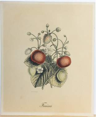 Hand-colored Strawberries