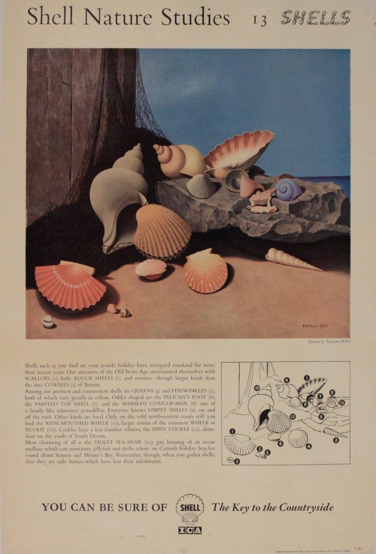 "Tristram Hillier (1905-1983) Shell Nature Studies ""Shel"