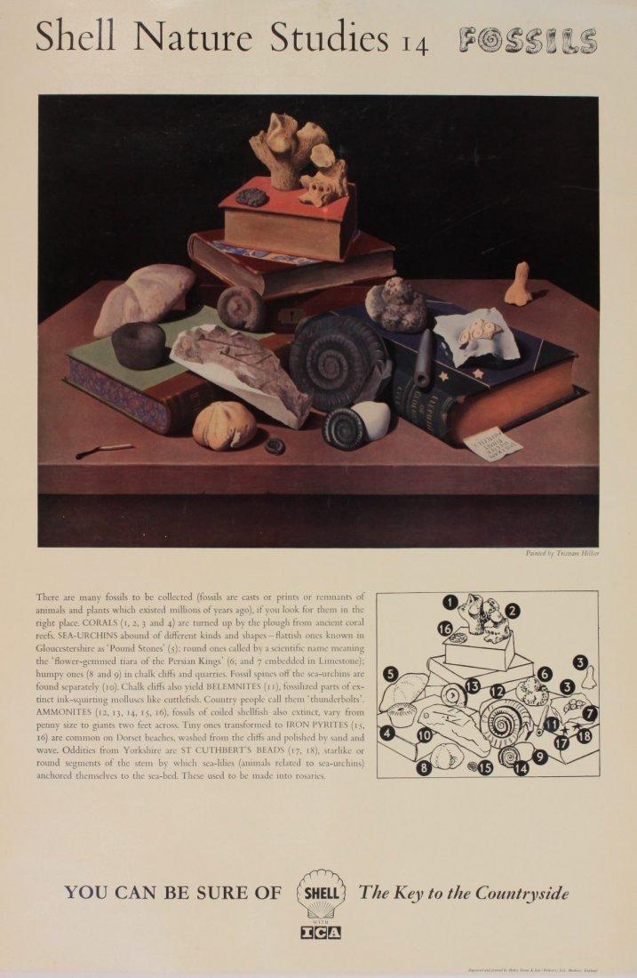 """Tristram Hillier (1905-1983) Shell Nature Studies """"Foss"""