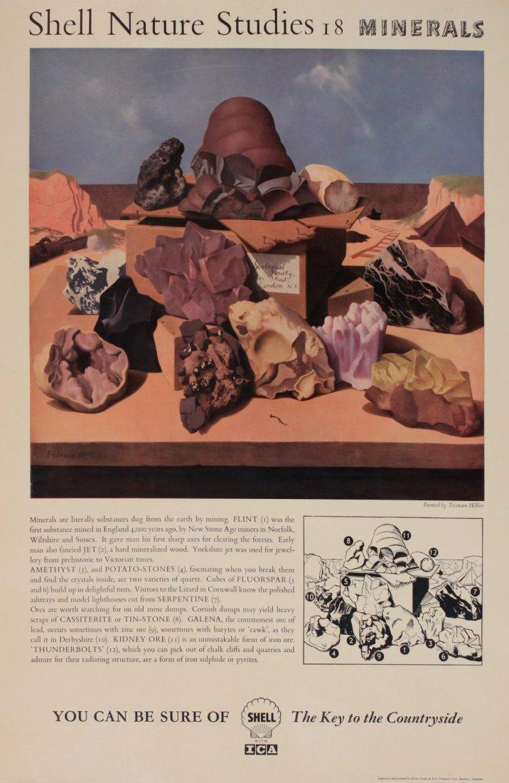 "Tristram Hillier (1905-1983) Shell Nature Studies ""Mine"