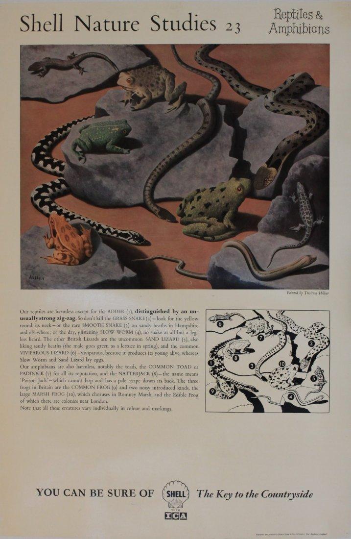 "Tristram Hillier (1905-1983) Shell Nature Studies ""Rept"
