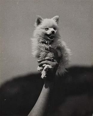 ALFRED EISENSTAEDT Very Small Dog Being Held 1937