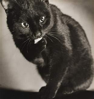 FRED KORTH Sweet Black Cat 1930s