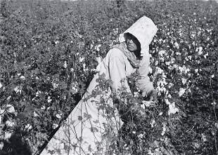 MARION POST WOLCOTT  Mexican Laborer picking Cotton