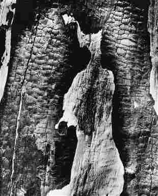 CLARENCE JOHN LAUGHLIN Tree Abstraction