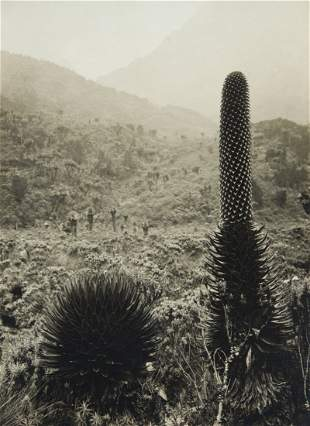 4 VIEWS Giant Lobelia African Fauna 1906