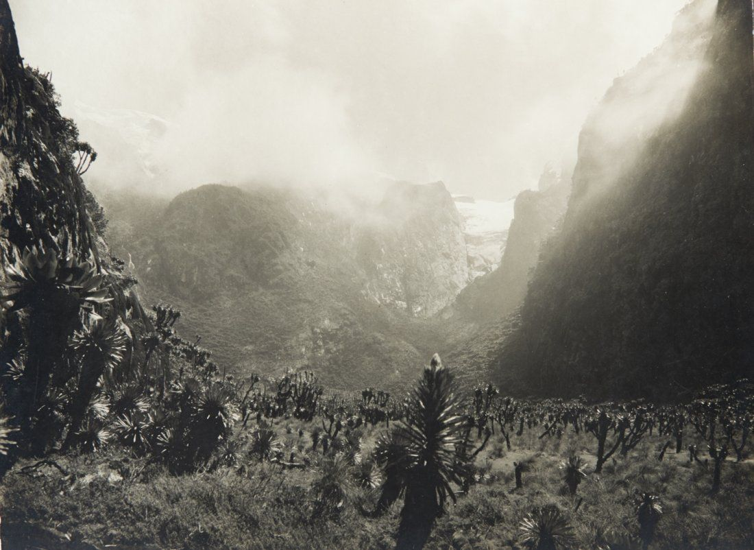 3 VIEWS Bujuku & Mobuku Valleys, large fauna