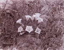3 VIEWS HIMALAYAS Lowland Flowers 1899