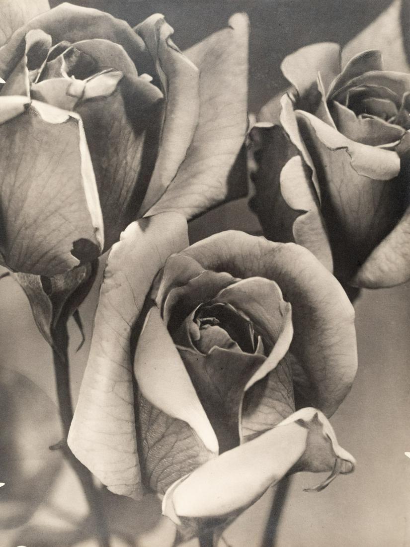 PIERRE AURADON ROSES Modernist French 1930s