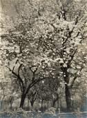 RAYMOND TIBAUT Gorgeous Tree Flowers 1940