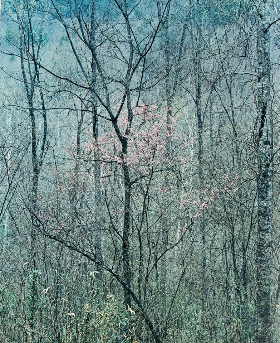 ELIOT PORTER Intimate Landscapes Portfolio 1979