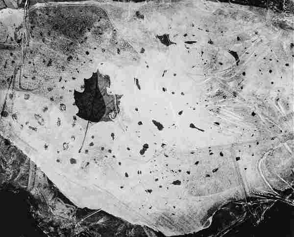 PAUL CAPONIGRO Beautiful Classic Leaf in Ice 1958