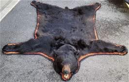 Very Large Montana Taxidermy Black Bear Rug