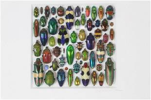 Framed Christopher Marley Coleoptera Mosaic, Beetle Art