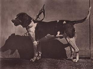 Cremiere, (3) Dog Show Photographs, 1881