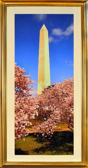The Washington Monument During Cherry Blossom