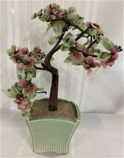 Jade Tree in Planter