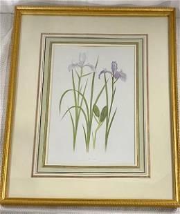 Lyons Ltd. Iris Print