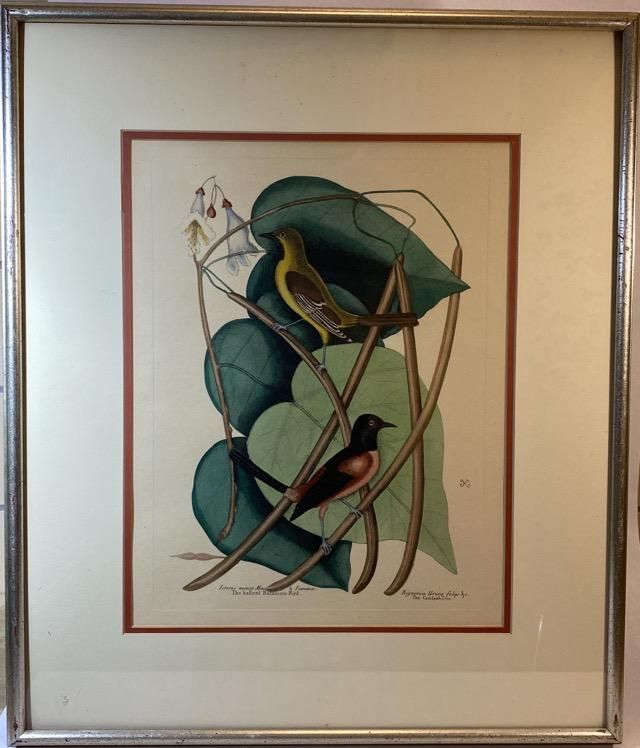 Mark Catesby Hand Colored Print