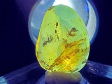 Stunning Amber with ants trapped in battle and gnats