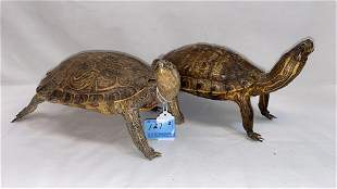 """2 ANTIQUE TAXIDERMY ~ 10 1/2"""" & 11"""" LONG"""