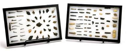 Fossilized Collection of Marine Sea  Freshwater Bones