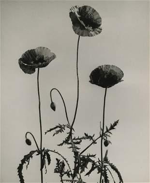 Roland Spedden, Floral Still Life, c. 1940s