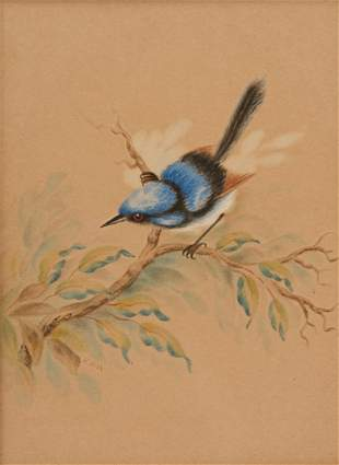 Watercolour of Australian Blue Wren, Signed in Picture