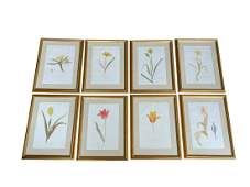 Framed Botanicals, Set of 8