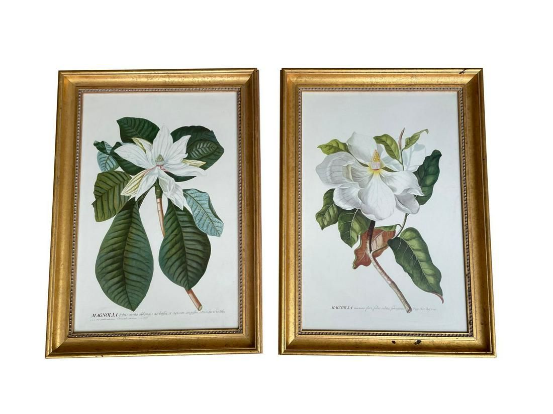 Framed Magnolia Prints, Set of 2