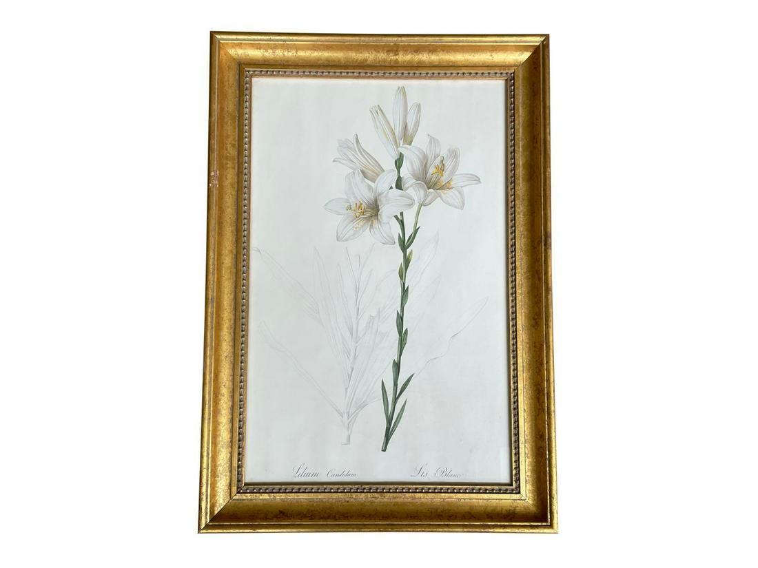 Lilium Candidum Framed Print