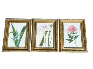 Framed Botanicals, Set of 3