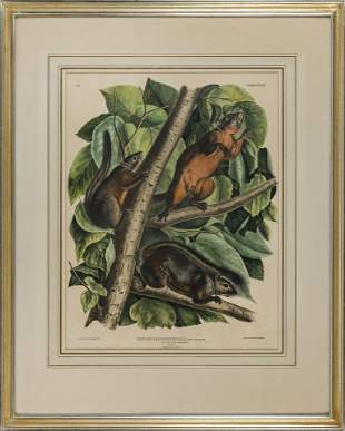 JOHN JAMES AUDUBON (New York/France, 1785-1851),