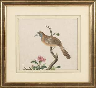 CHINESE SCHOOL (Mid-19th Century,), A bird perched on a
