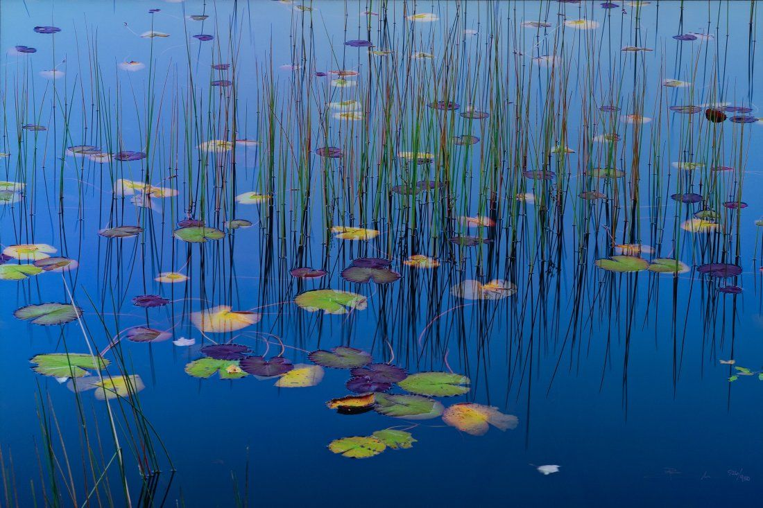 Peter Lik (Australian, b. 1959), Lilies of the Pond