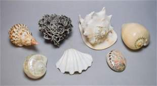 Grouping of Shells & Coral