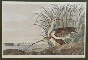 John James Audubon Lithograph Long-Billed Curlew