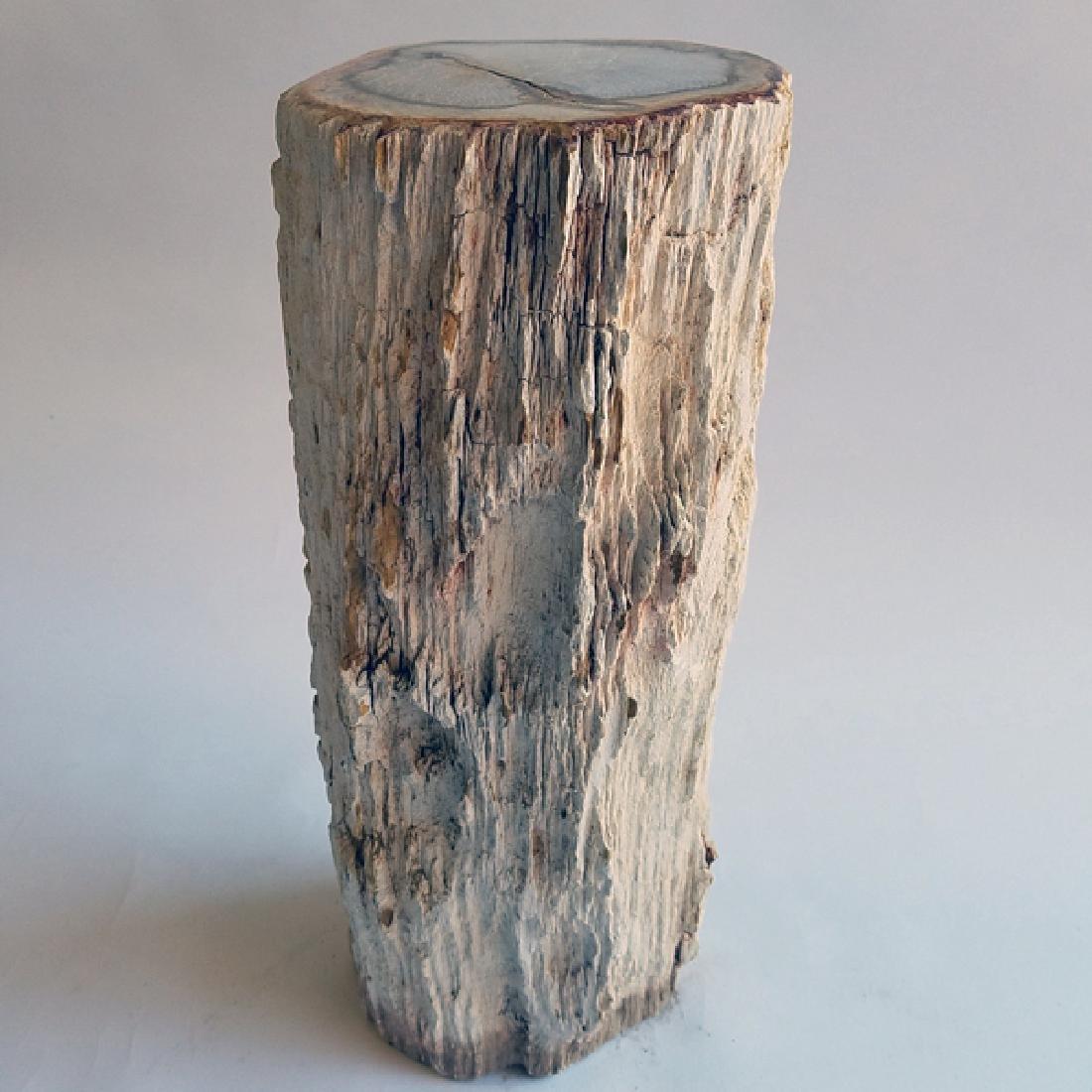 Petrified Wood Stump SCARCE HUGE 110Kg Natural Bark