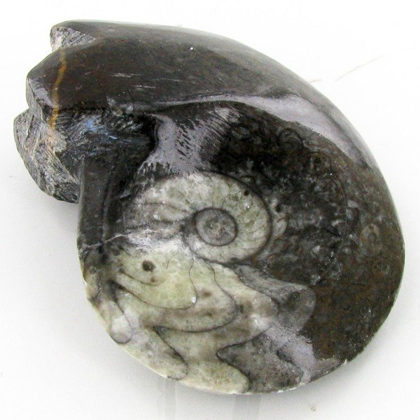 5A: 270ct Fire Polished Fossilized Ammonite Whole